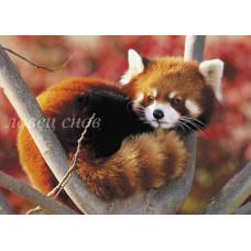 Красная панда 2